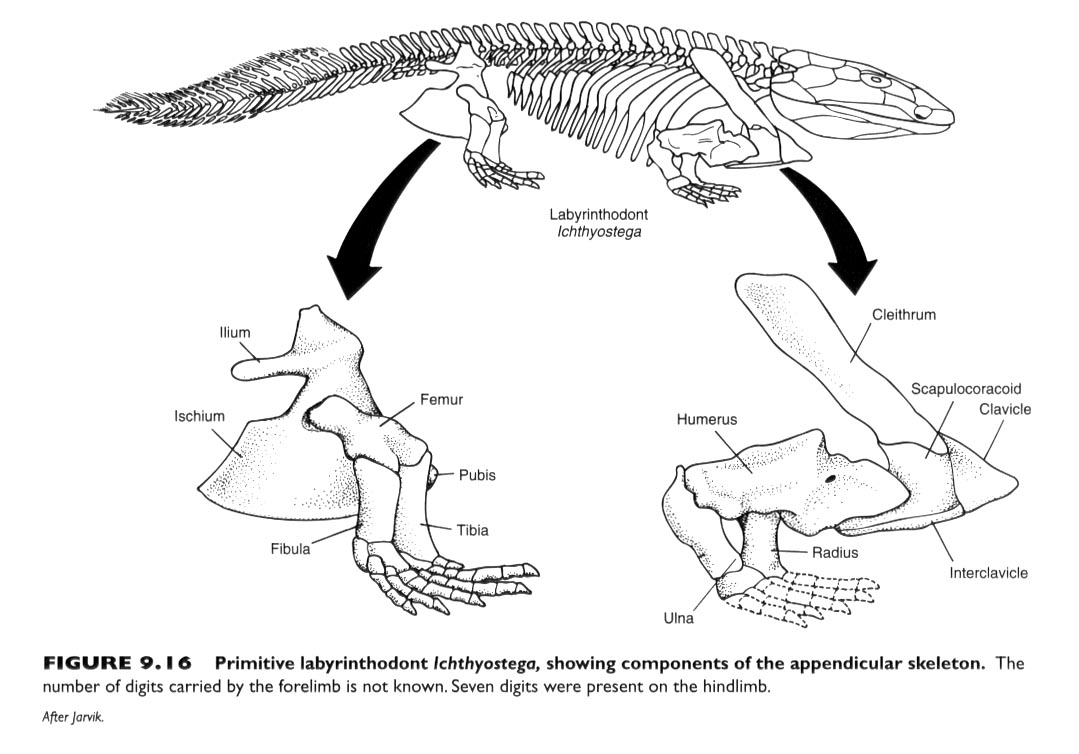 Comparative Vertebrate Anatomy | Faculty